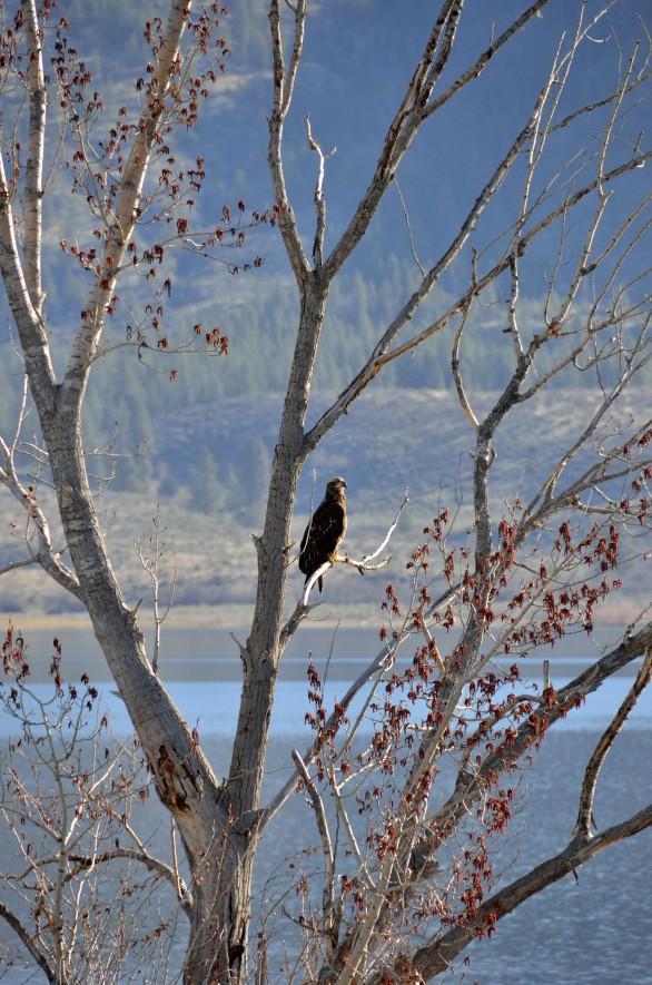 las osprey by apricot block