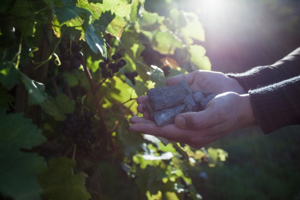 LVP deadman vineyard grows syrah and sauv blanc. soil profile full of metal and mineral rich weathering grey and black shale of sedimentary origin 2
