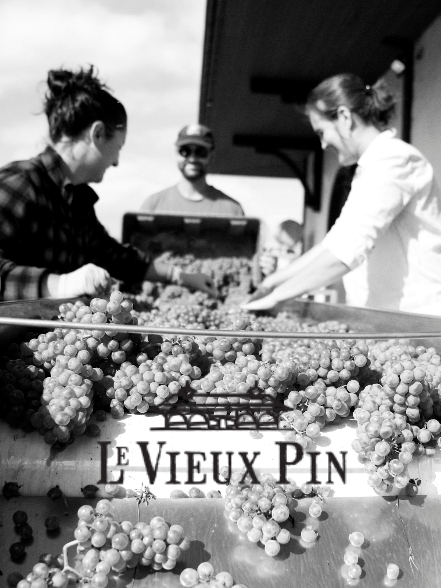 Le Vieux Pin Wine Society For A Day 6 Pack